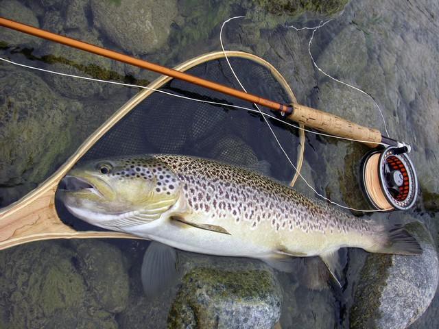 Un autre fish de plus de 50.......et bien grasse!!!!!!plus difficile que cette mémère, j'ai pas connu.....de la folie.....longue vie à toi belle maligne ;o))